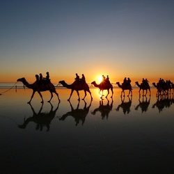 Zonsondergang en kamelen