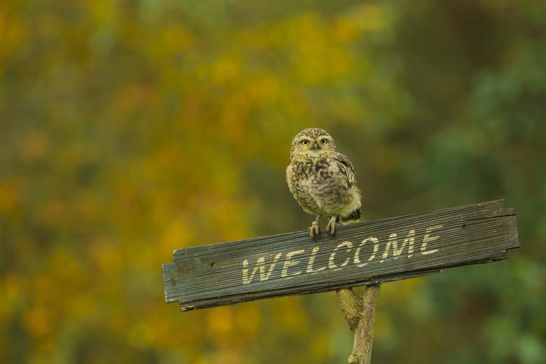 Hoi daar ben ik dan - Welkom allemaal! Op deze prachtige herfstdag staat het holenuiltje klaar om te beginnen voor vandaag.