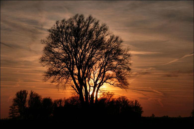 Zonsondergang 16 Jan 2020 - Mijn favo boom aan het Justerpad in Loppersum