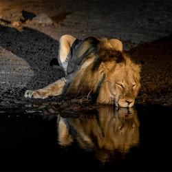 Koning bij nacht