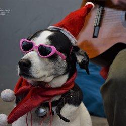 Kersthond