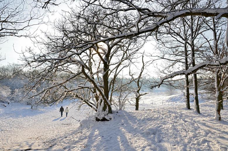 Winterwandeling - Heerlijk om in de natuur een wandeling te maken, zeker als het net gesneeuwd heeft.<br /> En wij waren niet de enige.