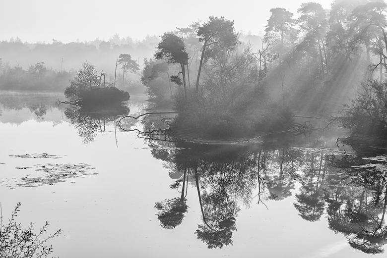 Stilte - Een windstille dag bij het Goorven in Oisterwijk. Het ven weerspiegelt de bomen, waar de zonnestralen net doorheen prikken