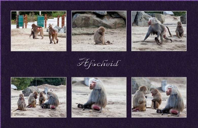 Afscheid - Een tijdje terug heb ik een foto geplaatst waarop te zien was hoe in de dierenwereld afscheid wordt genomen van een dierbare. Ik had nog wa