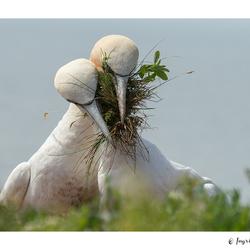 Samen aan het nestje bouwen
