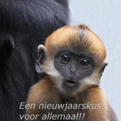 A monkey's kiss.....
