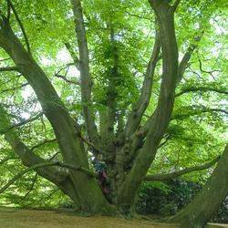 dreamtree.......