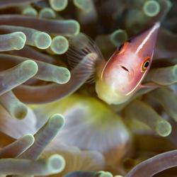 Nemo kijkt met bewondering naar de camera!