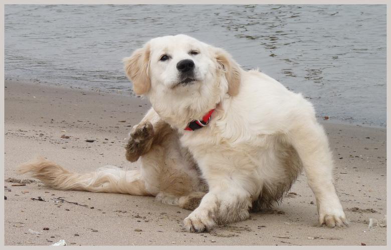 Aaaaaah... - Even krabben hoor!<br /> <br /> Vandaag 2 foto&#039;s van onze Golden Retriever tijdens het uitlaten.<br /> (Volgende foto komt iets l