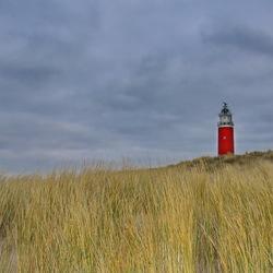 Texel 21