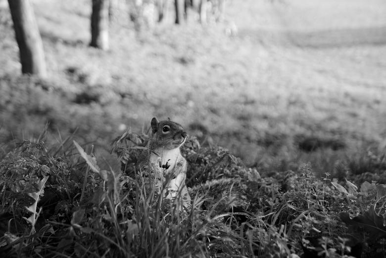 """Grondeekhoorn - Londen - De grondeekhoorntjes van Londen. Schattige beestjes die een hoop aandacht (en eten) van de toeristen krijgen <img  src=""""/imag"""