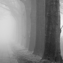 Beuken in de mist in zwart wit