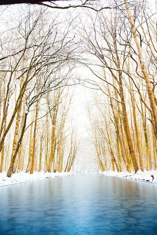 Winterse dag in het bos