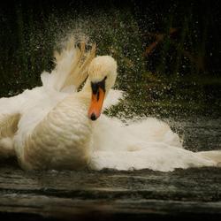 Dance of the lake II