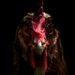 Low key chicken