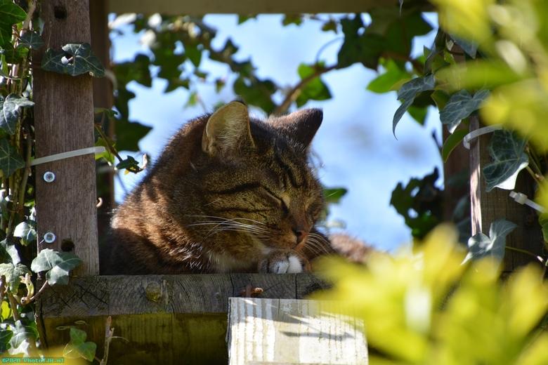 Neelix de kat. - Neelix de kat, geboren in maart 2010, aan het rusten in zijn Neelix-Tower.