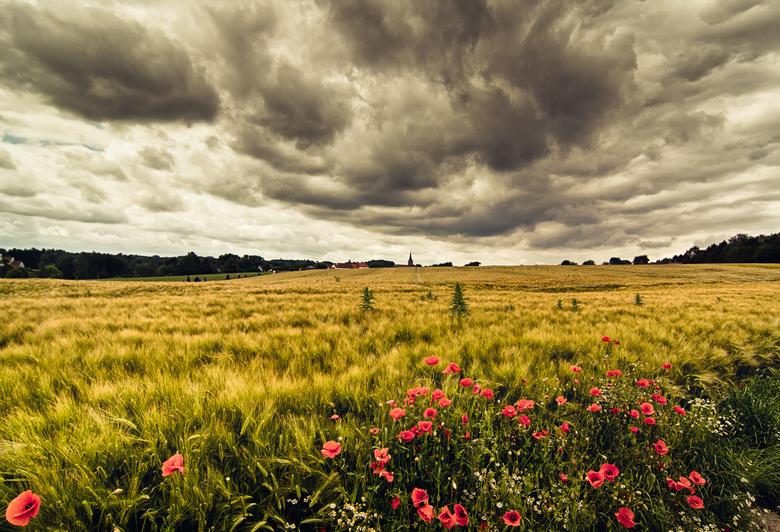 Golden Fields - Deze foto is genomen ergens in Belgie,in de beurt van Waterloo.Waren wij net op tijd weg toen enorm veel regen was uitgebroken <img  s