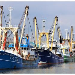 Haven van Oudeschild, Texel