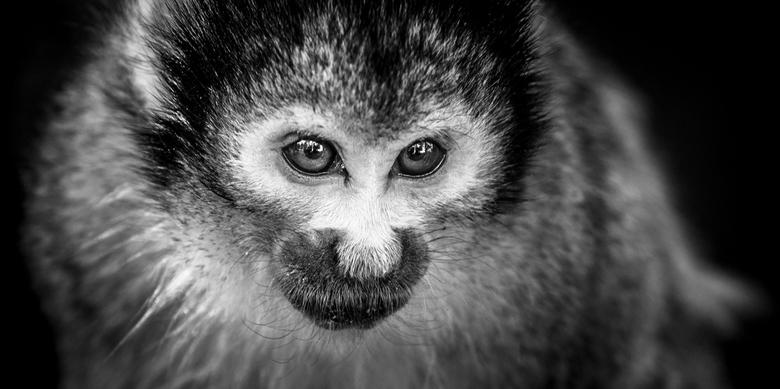 monkey business -