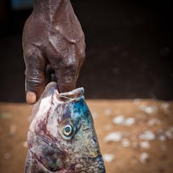 een vis 'aan de vinger'