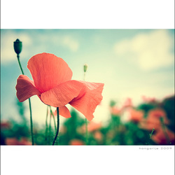 a red field...
