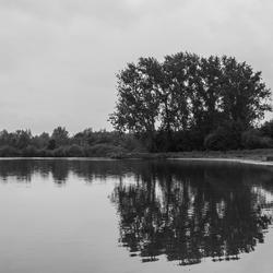 Bomen aan een meer