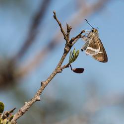 Vlinder van Madagaskar