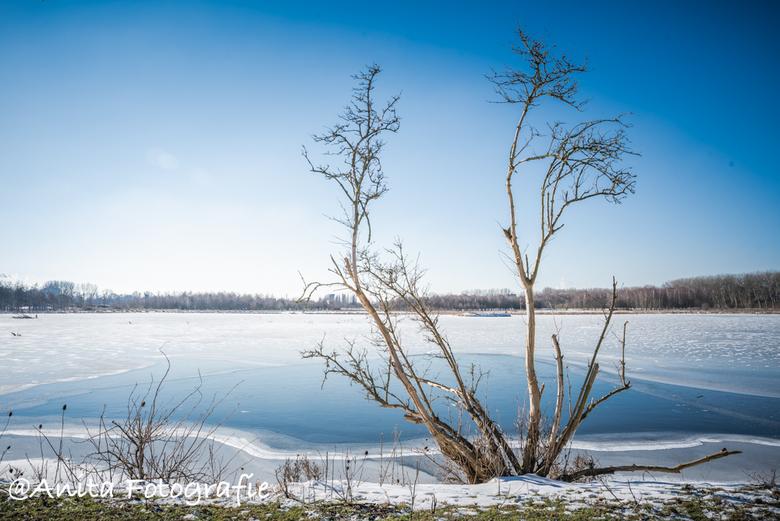 Stilleven in de sneeuw - Soort van stilleven in de sneeuw..mooi rustig plaatje zo....