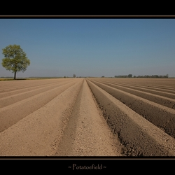 Aardappelveld....