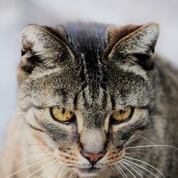 Door de ogen van een kat