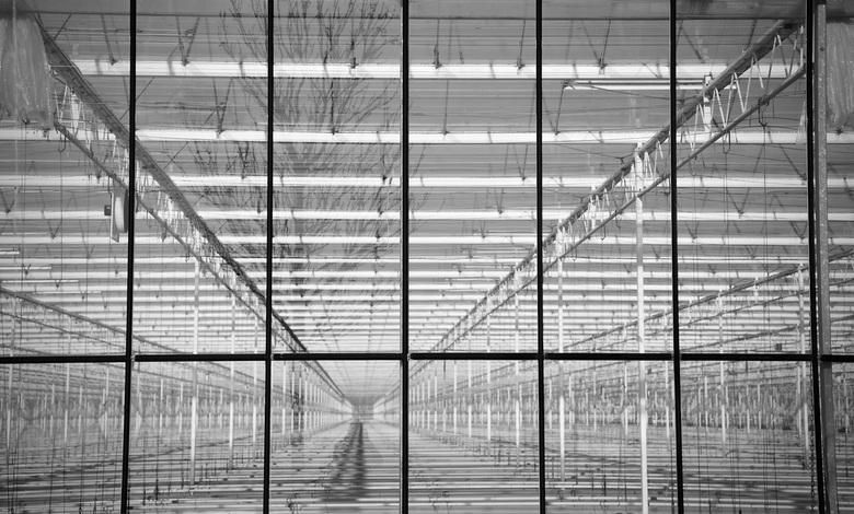 Warenhuis - Een warenhuis zonder gewas, zag ik onderweg en gewoon vanaf een laan gefotografeerd.