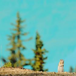 Eekhoorn Peyto Lake