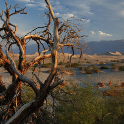 Dunes of Death Valley at sunrise 02