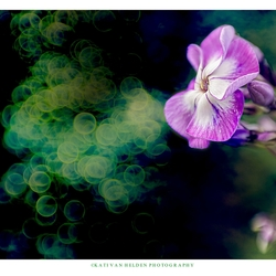 Purple flower with green bubbles