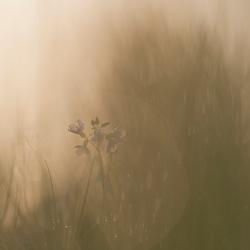 Door het gras