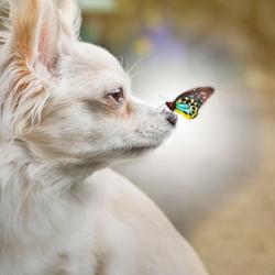 Love between animals