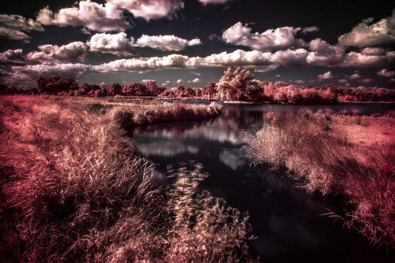 infrarood dakhorst