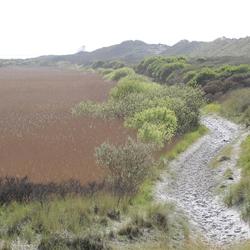 achter de duinen op ameland