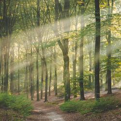 Zonsopkomst in het Amerongse Bos