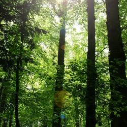 licht in donker bos
