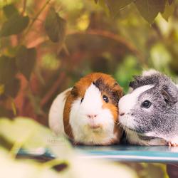 Mieps & Archie