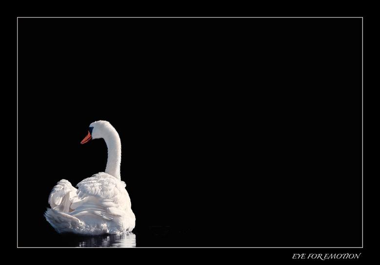 Black & White - Deze is voor Fred...omdat hij zo graag weer eens een zwanenfoto ziet...