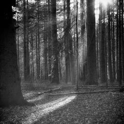 Autumn Black and White