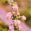 Pinkish nature