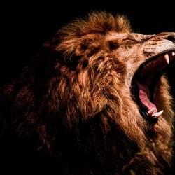 Lekker Leeuwen portretje