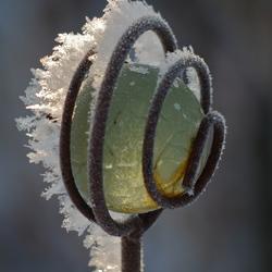 sneeuw kristallen
