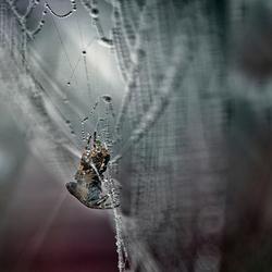 Spinnetje in de mist