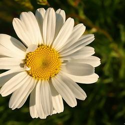 Waar een klein bloempje groot in kan zijn 2