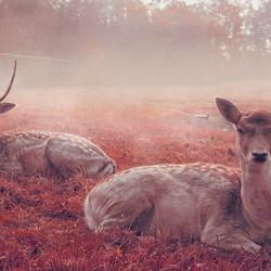 My deer 2