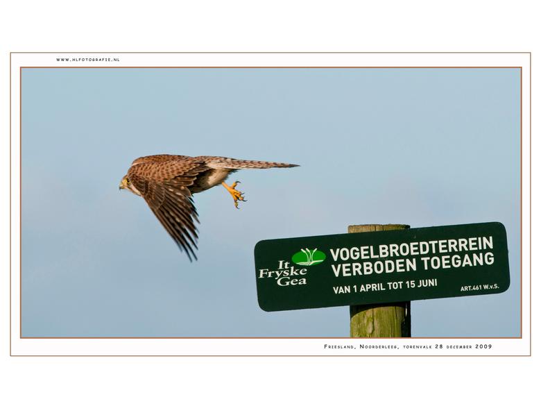Wiekelend naar 2010 - DE VOGEL DIE IEDEREEN KENT <br />  <br /> Amateurvogelaar, niet-vogelaar of professioneel ornitholoog, kind of volwassene, ied